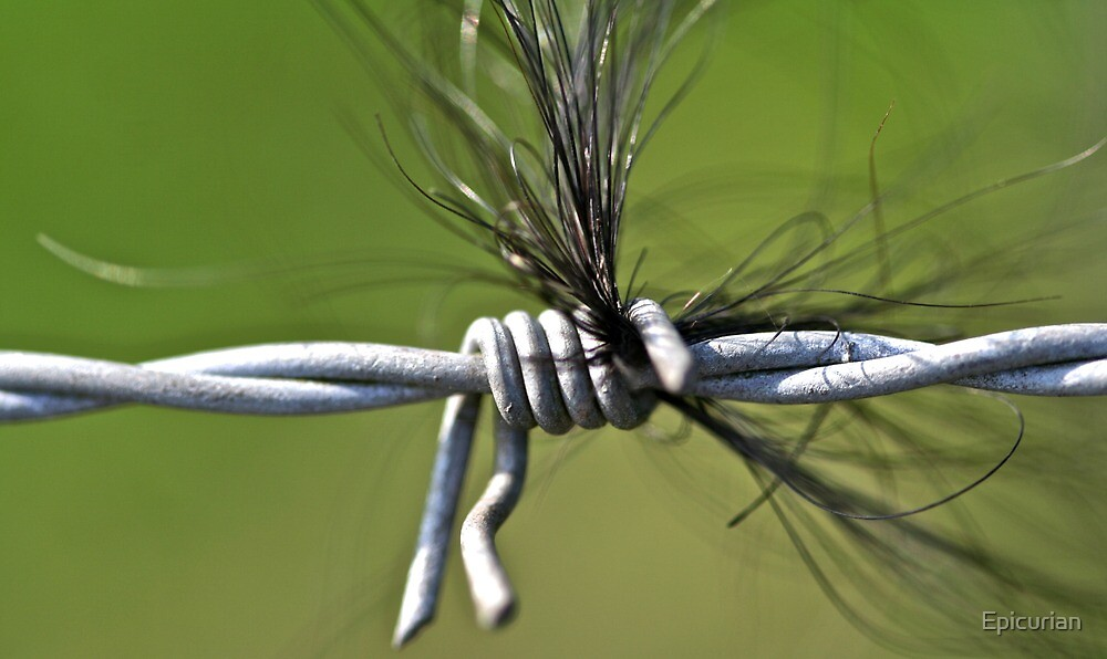 Hair on a Wire by Epicurian