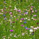 Field Of Flowers by Kuzeytac