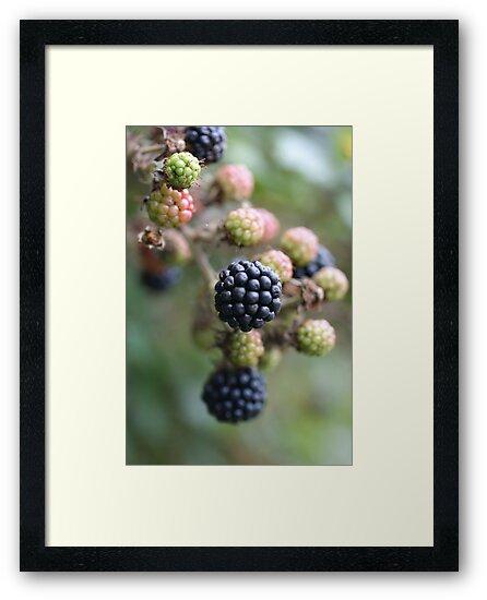 Blackberries by marens