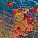 Fall color over the pond by Alex Call