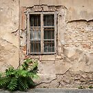 Praha: The Old Wall by Jacinthe Brault