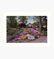 One of my gardens in Spring time Art Print