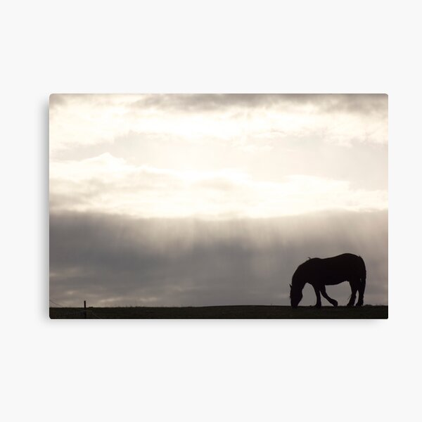 Dusk & Dew Canvas Print