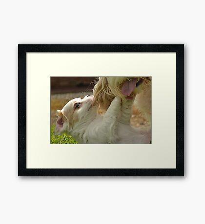 Playfull crazy puppy Framed Print