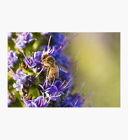 Bee - utiful! Photographic Print