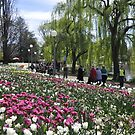 Floral Festival - Floriade - Canberra by chijude