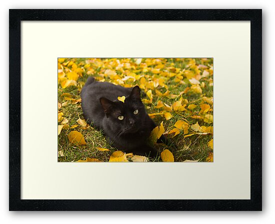 Cat Under Autumn Birch by Jordan Selha
