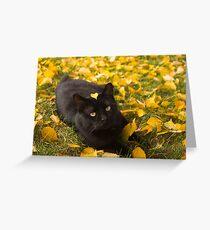Cat Under Autumn Birch Greeting Card