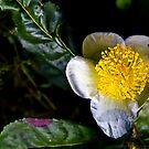 Wild flower by SHOT