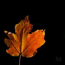 Autumn Light 1 by M. J. Cuthbertson