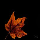Autumn Light 5 by M. J. Cuthbertson