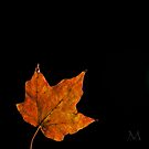 Autumn Light 2 by M. J. Cuthbertson