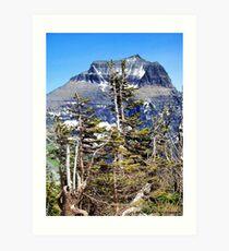 Windblown (Glacier National Park) Art Print