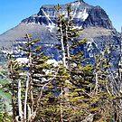 Windblown (Glacier National Park) by rocamiadesign