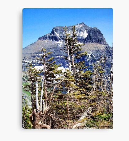 Windblown (Glacier National Park) Canvas Print