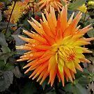 Orange spikes - dahlia by bubblehex08