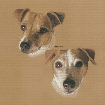 Lady and Bailey, Jack Russells by micheleashby