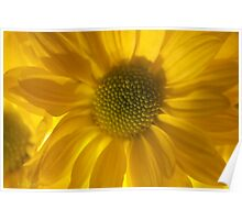 Floral joyful feelings and love. Poster