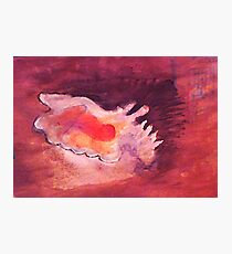 Conch shell, watercolor Photographic Print