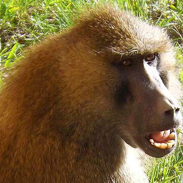 Baboon Face Closeup by PhotosByTrish