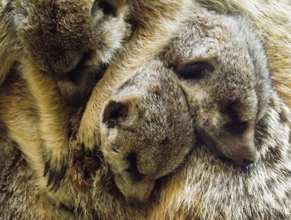 Pile of Baby Meerkats Sleeping by PhotosByTrish