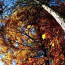 Oxford, MI | Autumn 6 by RJ Balde