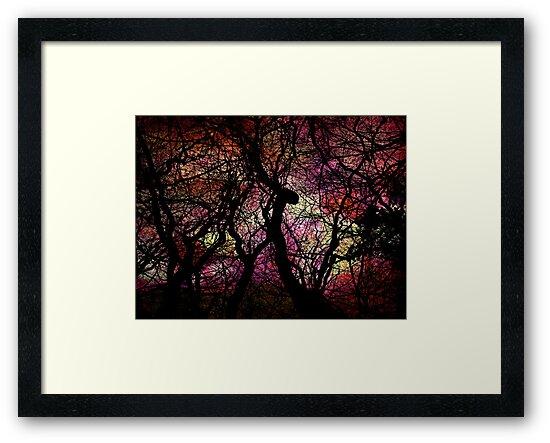 Forest Rainbow by Scott Mitchell
