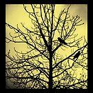 A Tale Of Two Crows by Keri Harrish