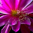 Cactus Flower Splendour by Heather Friedman
