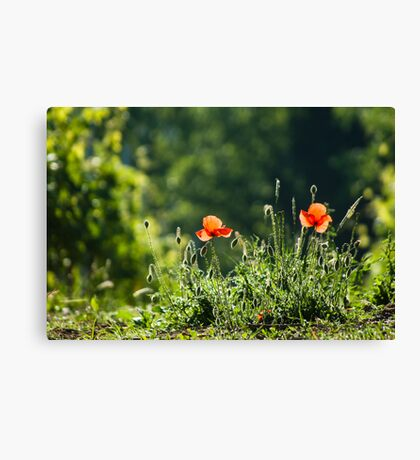 Green with red Canvas Print