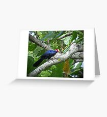Violet Turaco Greeting Card