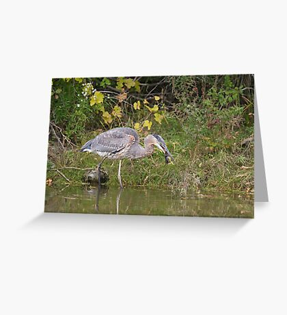 Surprise catch of the day! Greeting Card