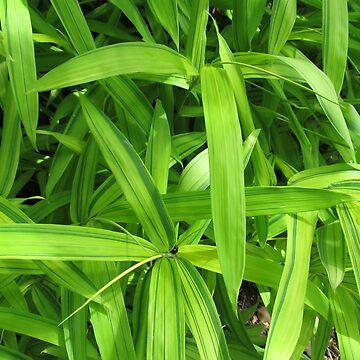 Green leaves by bethbatch20