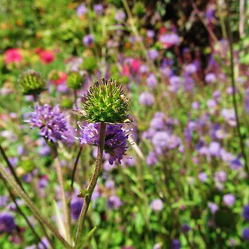 purple flowers by bethbatch20