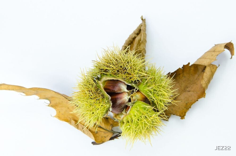 Chestnuts by JEZ22