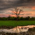 Mud Puddles by Leasha Hooker