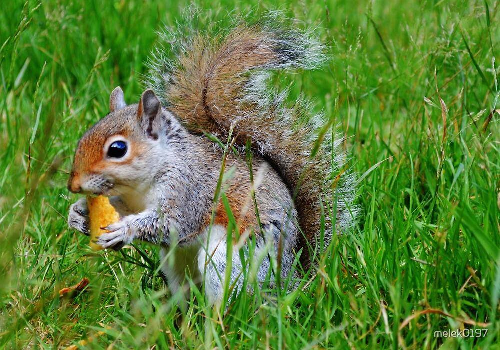 squirrel  by melek0197