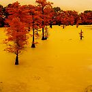 cypress trees on the bayou by soulexperience