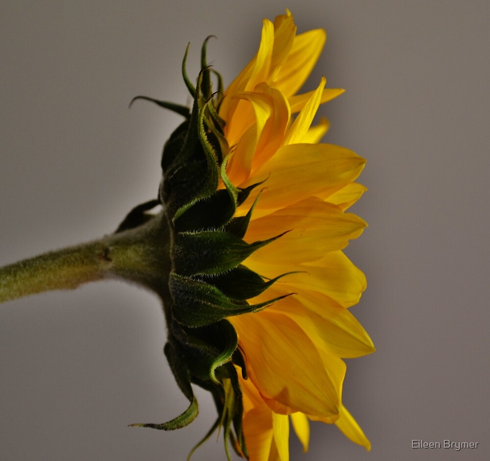 Reaching for Rays by Eileen Brymer