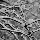 2012 - getting a cold by Ursa Vogel