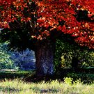 Autumn Leaves by T.J. Martin