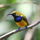 Sunbird for calendar by robmac