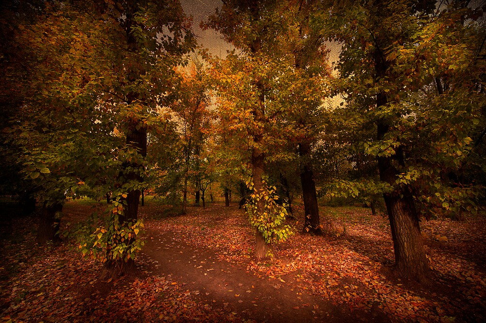 Shadows of Forest by Svetlana Sewell