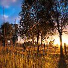 Mid-Winter Sunrise by Andrew Harris