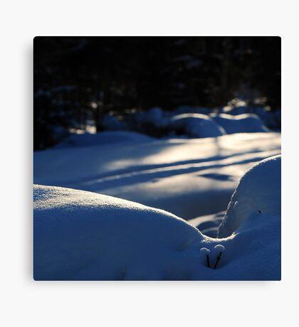 Winter Canvas Print