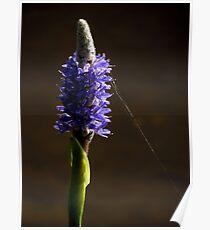Botanical Beauties ~ Part Three Poster