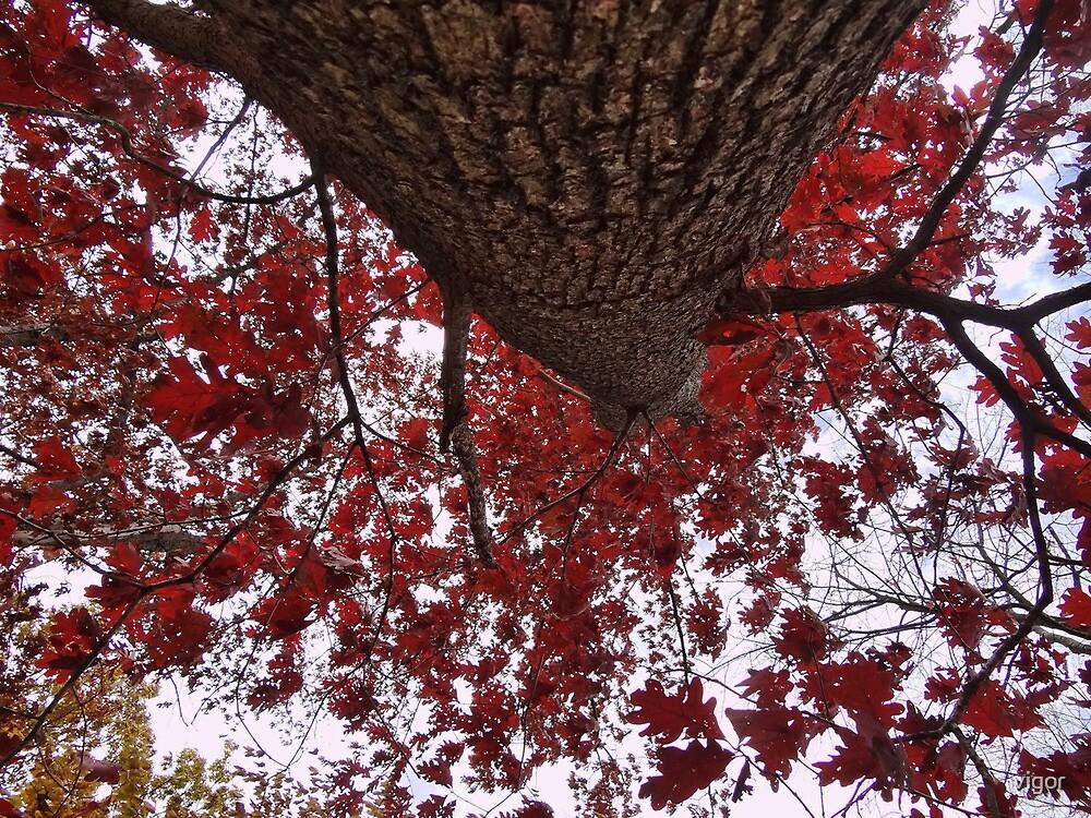 Big Red by vigor