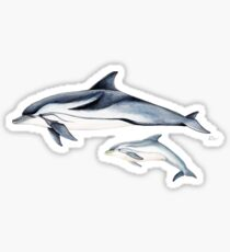 Striped dolphin Sticker