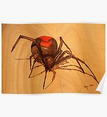 Pyrography: Australian Redback Spider Poster
