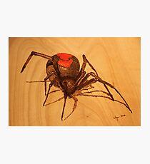 Pyrography: Australian Redback Spider Photographic Print